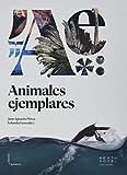 Animales ejemplares: 11 (Lienzos y Matraces)