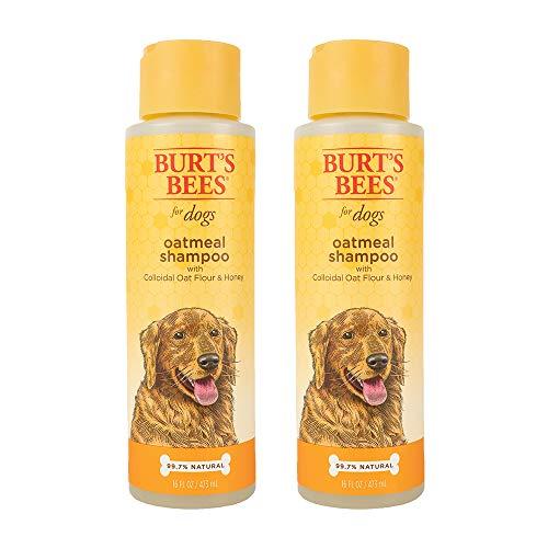 Burt's Bees All Natural Oatmeal Shampoo for Dogs | Made with Colloidal Oat Flour and Honey | Moisturizing Oatmeal Dog Shampoo, 16 Ounces, Pack of 2