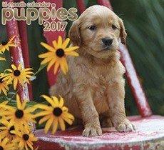 Puppies 2017 Organizer Scheduler Appointment Book Wall Calendar (16 Month)