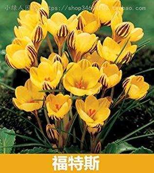 VISTARIC 100 pcs/sac, graines Spathiphyllum, balcon en pot, la plantation est simple, le taux de bourgeonnement de 95%, l'absorption de rayonnement, couleurs mélangées