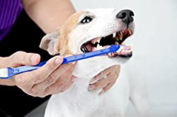 Double Headed Dog Toothbrush - Best Dog Teeth Cleaning Products