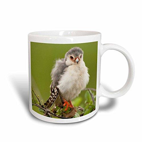 3dRose Kenia, Samburu Reserve, Pygmy Falcon bird-af21jmc0278-joe und Mary Ann McDonald-Two Ton Tasse, Keramik, rot, 10,2x 7,62x 9,52cm