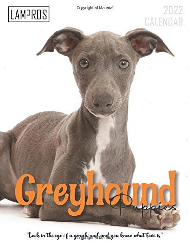 Greyhound Puppies Calendar 2022: Great 18-month Grid Calendar 2022 from July 2021 to December 2022 for all fans!!!