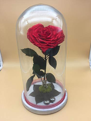 Rosa eterna roja. Forma de corazón. Cúpula de Cristal. Altura 30 cm....
