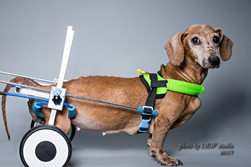 New!!! XS-LW: Special for Corgi, Dachshund, Basset,Adjustable Dog Pet Wheelchair, Hind Legs Rehabilitation, 7 Sizes, Dog Cart,Wheels (Including Belly Band for Spine Protection, Dog Leash