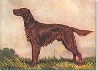 ペイント番号キット大人と子供のための番号によるアイリッシュセッター犬のペイントDIY油絵ギフトキット事前印刷