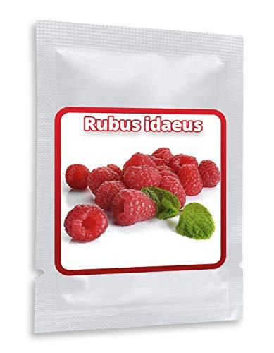 Framboise Rouge - env. 25 graines/pack - Rubusidaeus - résistant au gel/pluriannuelle