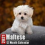 Calendar 2021 Maltese: Cute Maltese Photos Monthly Mini Calendar With Inspirational Quotes each Month