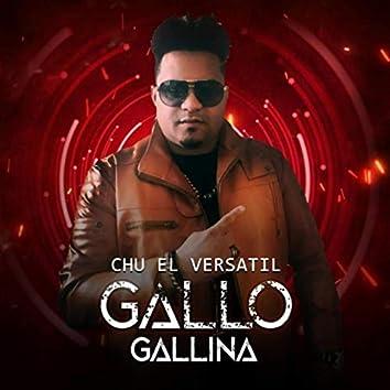 Gallo Gallina
