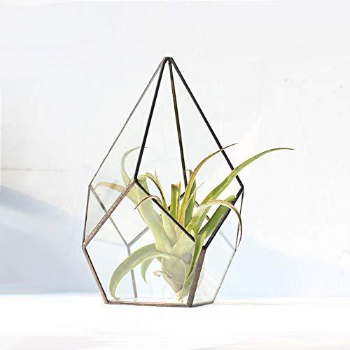 MINGZE Cristal terrario geométrico, para Plantas suculentas, Moderno artístico Claro Aire Maceta...