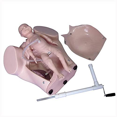 HUAQINEI Modelo avanzado de partería, Modelo de Parto de la Pelvis Femenina, simulador de Parto Elikliv para la enseñanza de la ginecología, educación y Estudio de la fertilidad médica