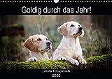 Goldig durch das Jahr! (Wandkalender 2020 DIN A3 quer): Liebevoll ausgewählte Golden Retriever Motive begleiten durch die Jahreszeiten. (Geburtstagskalender, 14 Seiten ) (CALVENDO Tiere)