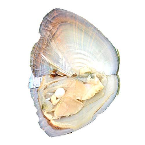 Crazyfly Huîtres rondes avec véritable perle pour bricolage collier kit de perles emballage sous vide 7–8 mm bijoux coquillage