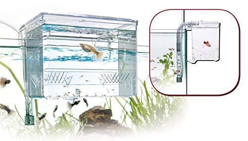 Amtra Aufzuchtbecken Breeding Box Maße 17x13x13 Top Qualität
