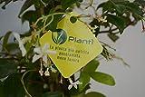 Zoom IMG-1 planti piante vere da esterno