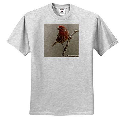 3dRose Danita Delimont - Birds - Male House Finch in Winter. - Youth Birch-Gray-T-Shirt Small(6-8) (ts_345307_28)