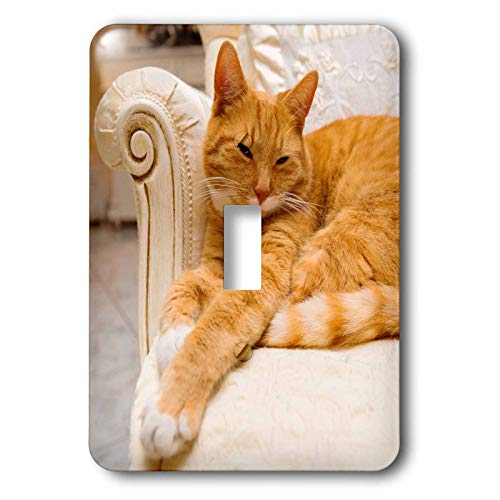 1-Gang Wall Plate Cover Decorator Wall Switch Light Plate Double Receptacle Outlet Happy Orange Tabby Cat Relaxing On Fancy Armchair Classic Beadboard Unbreakable Faceplate