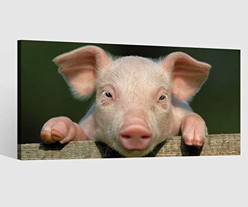 Leinwandbild Tier rosa Schwein Ferkel lustig Ohren Leinwand Bild Bilder Tierwelt Wandbild Holz Leinwandbilder Kunstdruck vom Hersteller 9AB896, Leinwand Größe 1:80x40cm