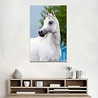 Sadhaf lienzo animal pintura al óleo caballo blanco cartel en lienzo imprimir imagen para sala de estar pared imagen art deco a3 50x70cm