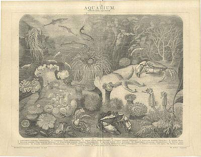 Kunstdruck Aquarium Seestichling Zahnkarpfen Seerose Garnele Seestern Krabbe Brockhaus 0338