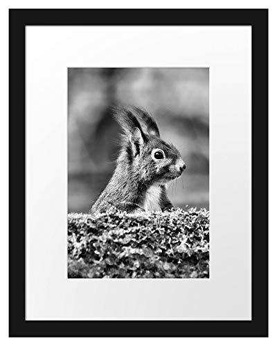 Picati Eichhörnchen hinter Baumstamm Bilderrahmen mit Galerie-Passepartout/Format: 38x30cm / garahmt/hochwertige Leinwandbild Alternative