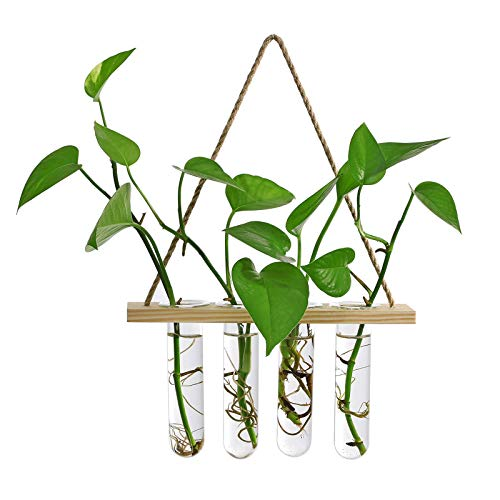 HUIKJI Macetero hidropónico de cristal, estación de propagación de plantas para colgar...