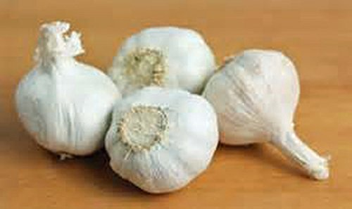 GARLIC BULB (20 Pack), FRESH CALIFORNIA SOFTNECK GARLIC BULB FOR PLANTING AND GROWING YOUR OWN...