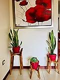 DULGHERIE STUDIO Juego de 3 Bases Porta Macetas de Madera Parota, elegante articulo decorativo, decoración de tus espacios, recamara sala cocina oficina, complemento para tus plantas, Modernas ,...