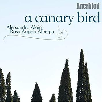 A Canary Bird