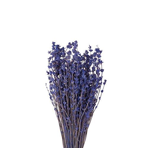 Lavanda Preservada, Ramo Grande de Lavanda Natural preservada Extra Larga 60/70 cm, 150 gr. Lavanda Seca Flores secas preservadas (150, 60)