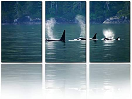 SALIZEN Three orcas or Killer Whales in a Row Three Animals and Pictures 3 Pieces Wall Art Paintings product image