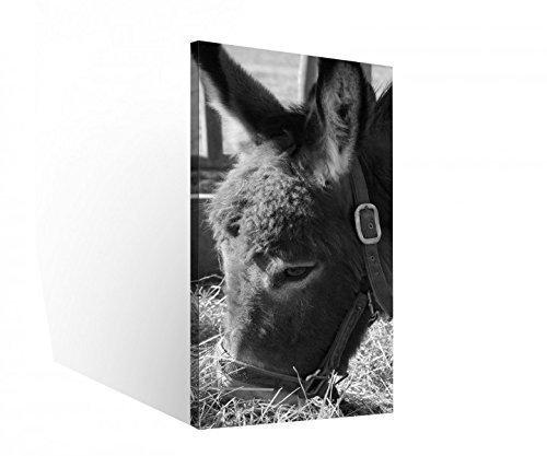 Leinwand 1 Tlg Esel schwarz weiß Tier Bauernhof Bild Wandbild aufgespannt 9C286Holz - fertig gerahmt - direkt vom Hersteller, 1 Tlg BxH:40x80cm