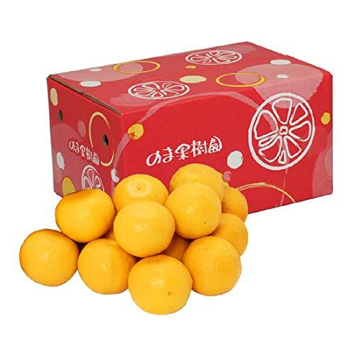 ニューサマーオレンジ(日向夏・小夏みかん) 家庭用 約3kg