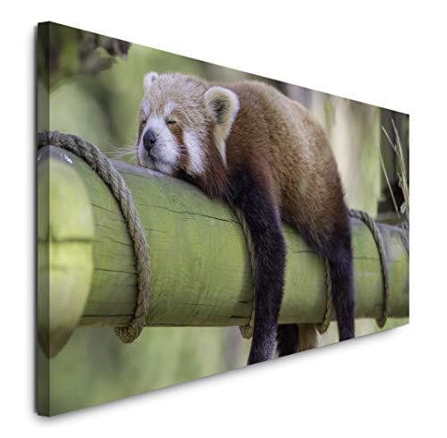Paul Sinus Art GmbH schlafender roter Panda 120x 50cm Panorama Leinwand Bild XXL Format Wandbilder Wohnzimmer Wohnung Deko Kunstdrucke