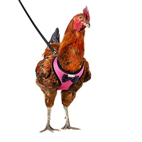 Yesito Chicken Harness Hen Size with 6-Foot Matching Belt, Comfortable, Breathable, Small Size, Suitable for Chicken, Duck or Goose Suitable for Weight About 2.3-3.8Pounds, Green (Small, Pink)