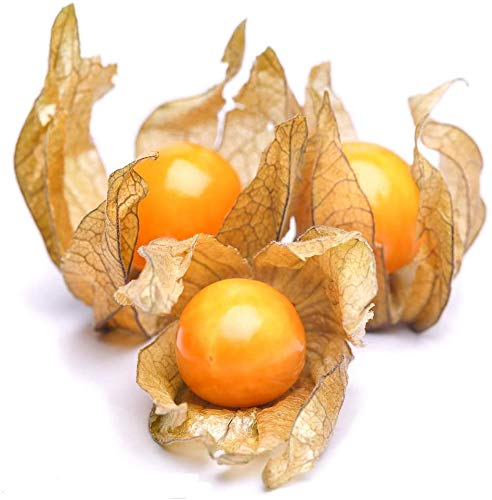 100Pcs Physalis Peruviana Seeds for Outdoor Courtyard Farm Planting Golden Cape Gooseberry Perennial Heirloom Juicy Fruit Seed Garden Decoration Tree
