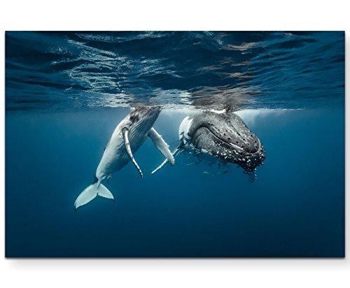 Paul Sinus Art Leinwandbilder   Bilder Leinwand 120x80cm Buckelwale im kristallklarem Wasser