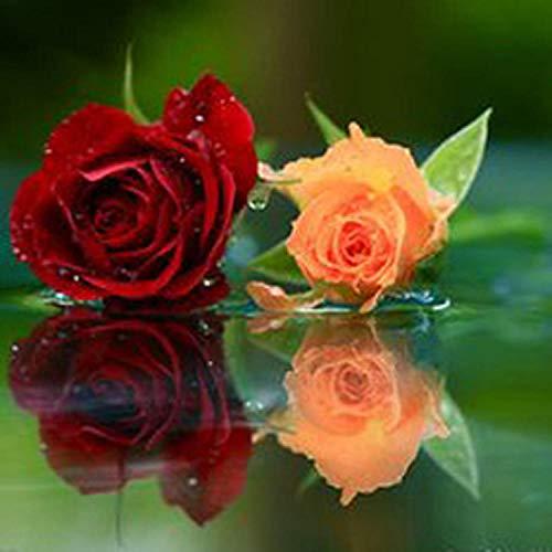 Aerlan Fleurs Sauvages en mélange Graines,arôme épanoui graines,Rose Rose Seed Garden Indoor Balcony Jardinage Flowers-200 Capsules