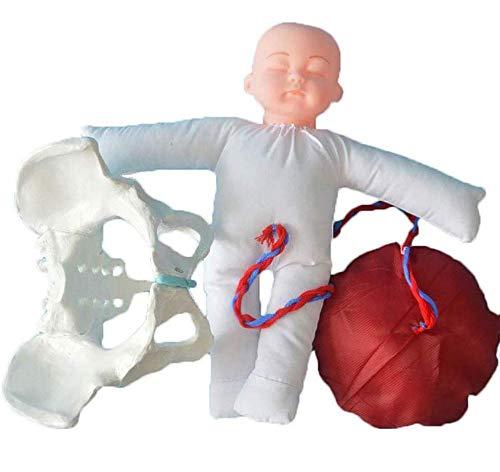 MLLI Weiblich Beckengeburtsmodell Hebammen-Trainingsmodell Geburtssimulator mit Modellen von Baby Becken für Gynäkologie Lehren