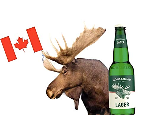 6 x Moosehead Lager Bier in 0,350 Ltr. Flasche aus Kanada
