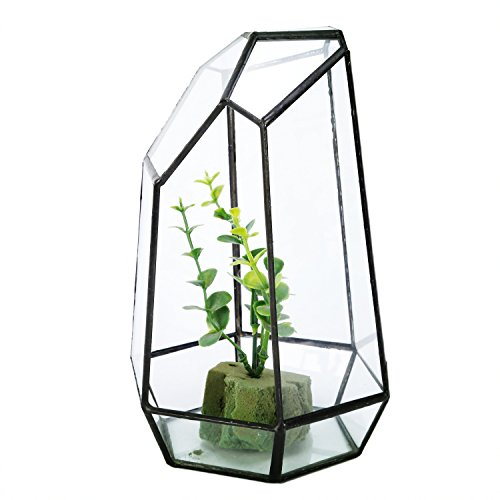 Asvert Glass Geometric Succulent Terrarium Balcony Polyhedron Irregular Plant Planter Box Fern Moss Display Flower Pot Indoor Outdoor Decoration