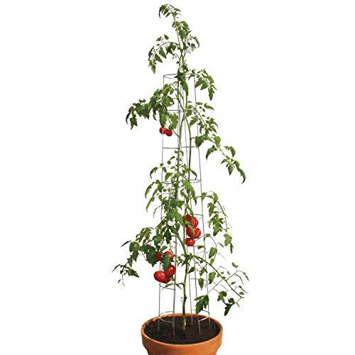 bellissa Tomatenturm - 90401 - Rankhilfe für Tomaten und Gurken - Stütze zum Pflanzen von Gemüse - Durchmesser 13 cm, Höhe 180 cm - 6er Set
