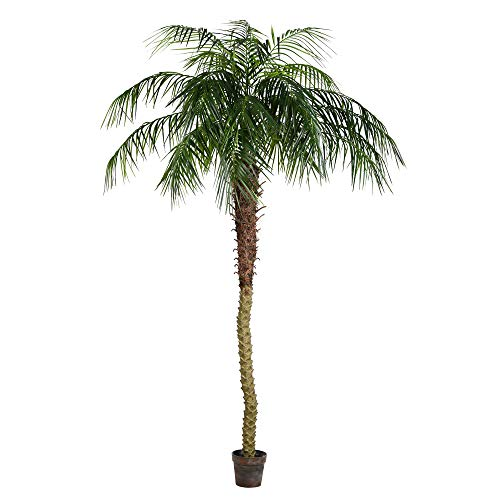 Vickerman Everyday Artificial Phoenix Palm Tree 8 Foot Tall For Indoor Use Home Office Christmas Holiday Tropical Decoration Design Your Tropical Oasis