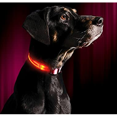 """Illumiseen LED Dog Collar - USB Rechargeable - Available in 6 Colors & 6 Sizes - Makes Your Dog Visible, Safe & Seen - Pink, Medium (16 – 20""""/41 – 53cm)"""