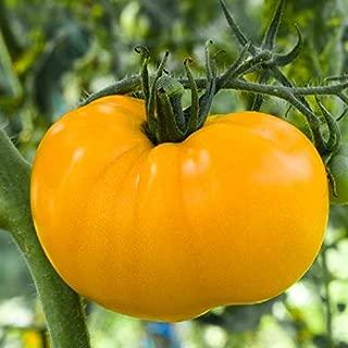 Tomato Jubilee Yellow 50 Seeds #SS7TM