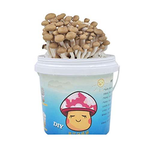 Rowe Cultive su Propio Kit de Setas en Interiores, Paquete de plantación de hogares Setas de autocontenido Oyster Mushroom Cultivation, encimera, Mesa o Bonsai (Color : G)
