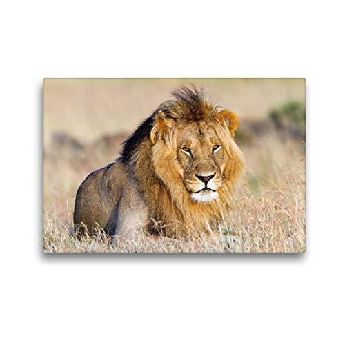 CALVENDO Premium Textil-Leinwand 45 x 30 cm Quer-Format Afrika: Majestätischer Löwe in der Masai Mara, Leinwanddruck von Angelika Stern