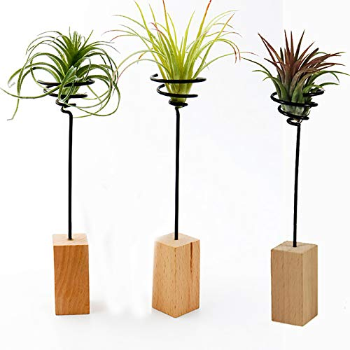 TIANTIAN Air Plant Holders Decor Planter Tillandsia Air Fern Display Stand for Home Office Live House Plants