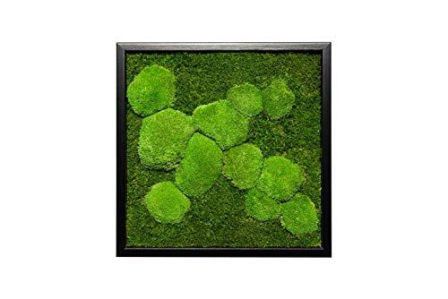 Moosbild Wandbild mit Moos Kugelmoos Moosplatte Pflanzenbilder Moosbilder versch. Maße günstig (45x45cm, schwarz)