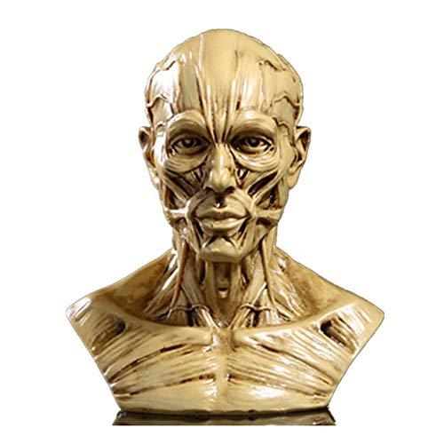 VOANZO Modelo humano de resina anatomía cráneo cabeza músculo hueso modelo médico tamaño mini (amarillo)